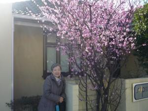 8月に桜とご対面!