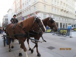 ウィーンの町中を観光用馬車がのんびりと走っていました。