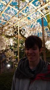 京都外大時代④「平安神宮の夜桜」